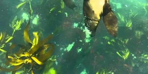 Snorkelling with seals in Cape Town